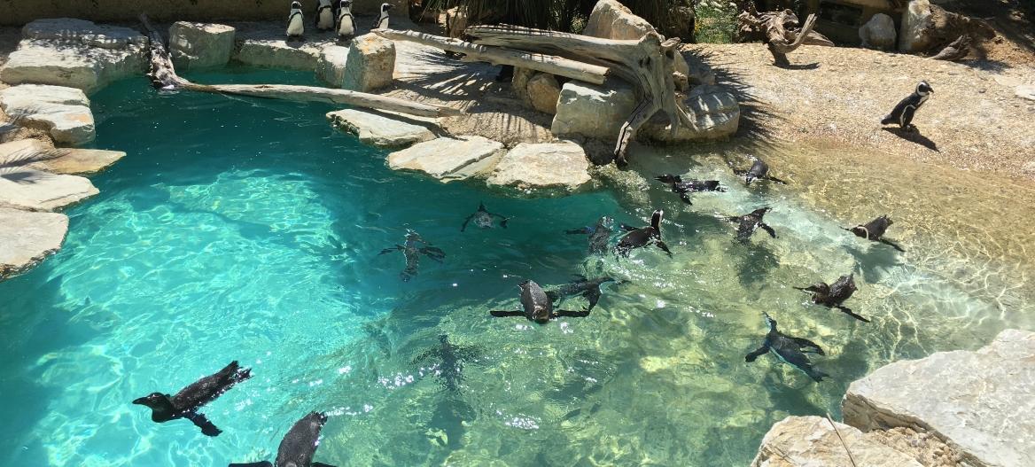 UIZA-Unione Italiana Zoo e Acquari